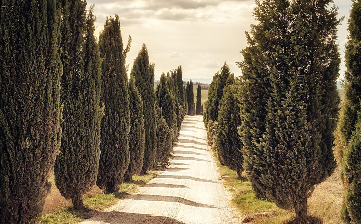 Among the 5 Best Road Trips In Italy, we have also the Chianti Road