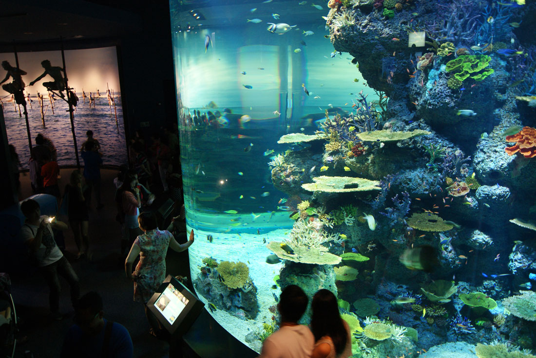 Discover the sea visiting the Marine Life Park in Singapore